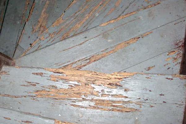 Termites In Wood Ceilings Taraba Home Review