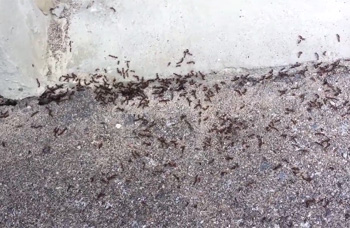 Ant Wars: Ant vs. Ant