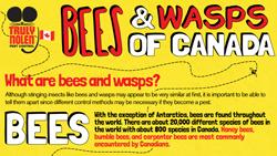 bee-wasp-canada-thumbnail