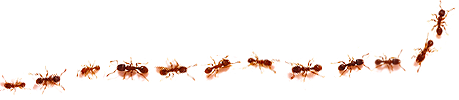 img_header_fireants_only