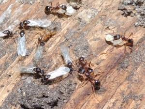 bugs 145